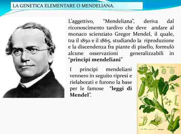 Genetica Mendeleiana