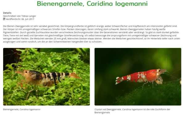 Caridina logemanni (fonte wirbellose.de)